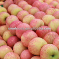 fresh fuji maçãs royal gala apple red delicious golden delicious qinguan