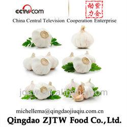 Garlic Price For Fresh Jinxiang Garlic