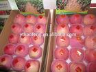 Yantai Fuji Apple and Fruit 2014