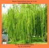 White Willow Bark extract salicin powder plant extract powder