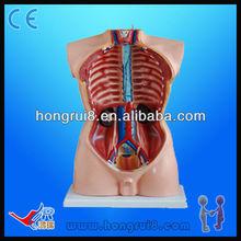 Advanced High Quality Medical Male Torso model 85cm educational model 19 parts human torso