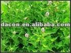 Herba Agastaches Seu Pogostemi Extract
