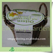DIY Basket Garden Planter