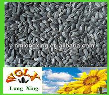 new crop oil extration sunflower seeds