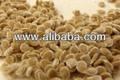 seme di pomodoro ciliegia