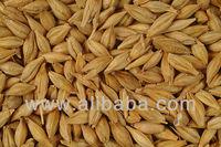 Animal Feed Barley, Ukraine