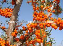 100% Organic SeaBuckthorn Fruit Oil (Hippophae Rhamnoides L.)