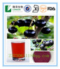 Water soluble super Antioxidant plant extract 25% Anthocyanins Black Currant/Ribes nigrum extract /Black Currant Extract