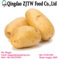 di patate da semina holland