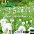 Fast venda 100% natural extrato de dandelion