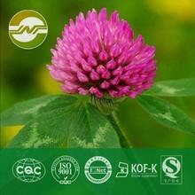 red clover isoflavones 40%
