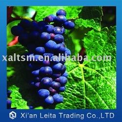 organic grape seed extract
