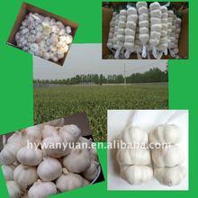 new crop pure white fresh garlic