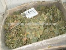 Ginkgo Biloba Leaf/ginkgo leaf tea