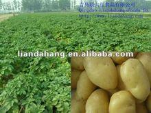 2015 Potatoes Production Area Supplier