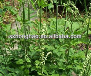 2.5%-5% Triterpene Glycoside Black Cohosh P.E.