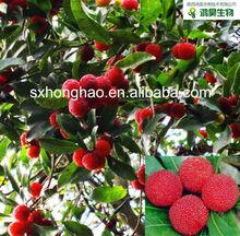 98%/99% Myricetin Myrica rubra fruit Extract