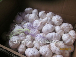 New crop fresh high quality natural garlic