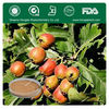 Best Selling Hawthorn Fruit / Leaf Extract