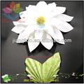 aster de flores para decoração de casa