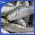 ตลอดทั้งปลาทูม้าขายส่ง,i qfแช่แข็งปลาทูปลาม้าทะเล