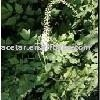Black Cohosh Extract -- Triterpenoside