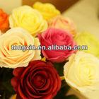 64cm single stem wedding decoration rose flower