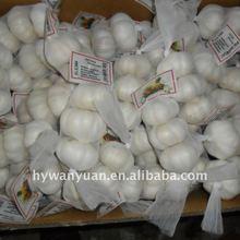 2014 New pure white fresh garlic