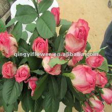 Fragrant fresh cut roses