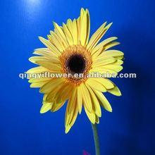 Fresh cut flowers Gerbera flowers