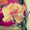 hot 2013 traite de fleurs en papier de soie fleur de lotus