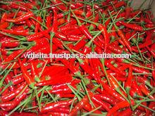 Fresh small chili