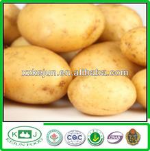 2014 Good Quality Yellow Potato For Exporting
