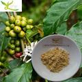 fabrika doğrudan tedarik bitki özü yeşil kahve çekirdeği fiyatı