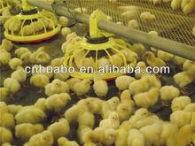Huabo chicken farm feeding and drinking