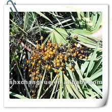 Saw Palmetto and Prostate Health