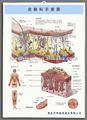 3d pele anatômicas gráfico