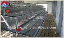 steel structure chicken house design production installation