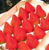 Strawberry Seeds Bulk For Planting