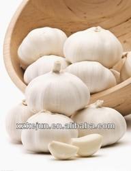 High quality of Pizhou fresh garlic
