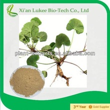 Free sample Top quality Centella Asiatica Extract Gotukola