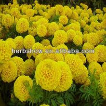 Hybrid F1 Marigold Seeds For cultivation