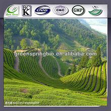 100% organic matcha green tea extract (NON GMO green tea extract powder)