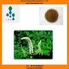 Organic-Black Cohosh Extract-2.5%HPLC