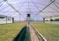 Material de policarbonato folha do policarbonato pc usado estufas comerciais/estufa do jardim