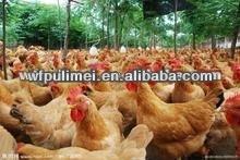 Compuesto probióticos en polvo para bajar de peso pollo ganancia con peso ganador