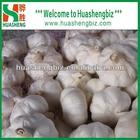 China natural garlic