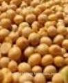 De frijol de soja de américa del sur, el brasil
