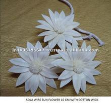 Sola sunflower