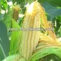 Dap fertilizantes cas precio: 7783-28-0